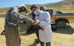 دامپزشکی کهگیلویه وبویراحمد پیشرو در برگزاری اردوهای جهادی / عشایر محروم منطقه گرگو بویراحمد از خدمات رایگان دامپزشکی بهره مند شدند ( + تصاویر )